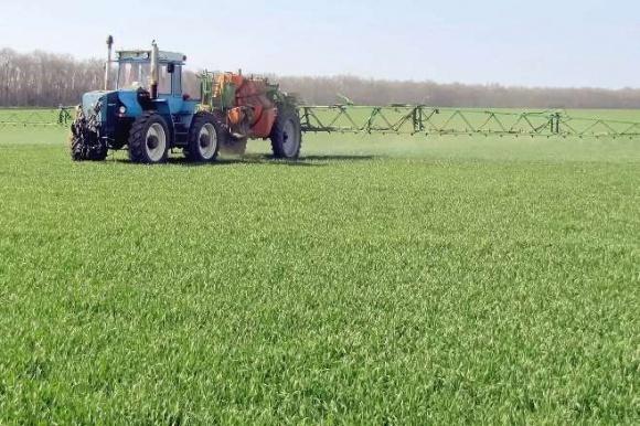 Защита пшеницы от вредителей в осенний период фото, иллюстрация