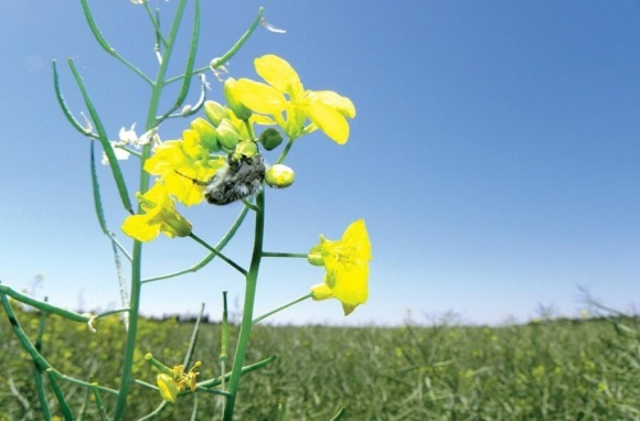 Трансформ™ — уникальный инсектицид от Corteva Agriscience фото, иллюстрация