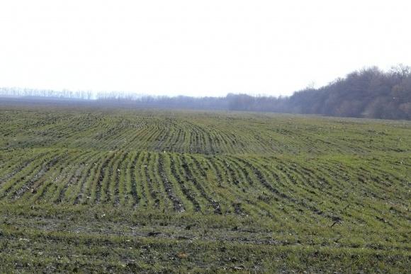 Факторы влияния на производство озимой пшеницы в Украине фото, иллюстрация