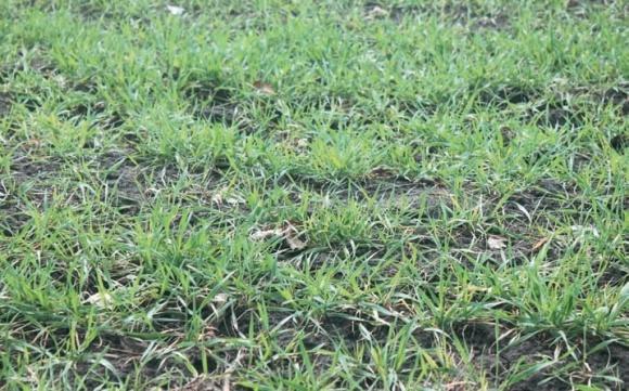 Осеннее внесение гербицидов в посевах зерновых фото, иллюстрация
