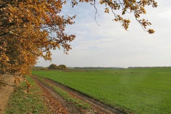 Оптимизация сроков посева озимой пшеницы фото, иллюстрация