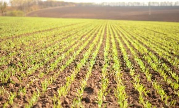 Чого чекати аграріям від року без зими? фото, ілюстрація