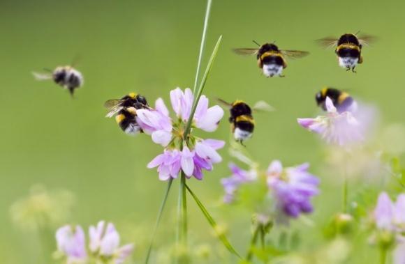 Вароатоз: вирок для бджоли?! фото, ілюстрація