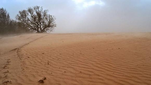 Вплив вітрів на посіви сільськогосподарських культур фото, ілюстрація
