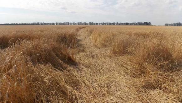 Урожай-2021: перші оцінки фото, ілюстрація