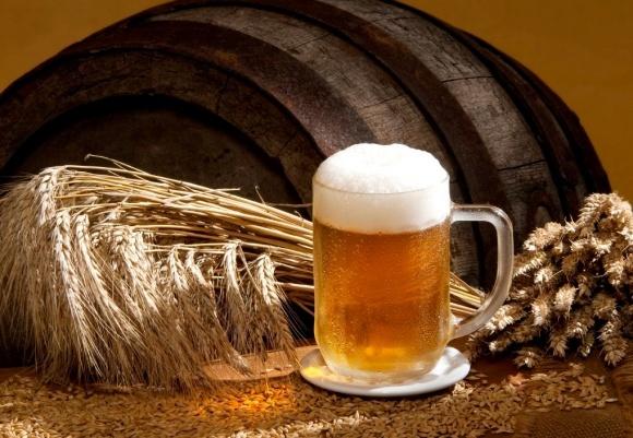 Пивоварний ячмінь – вигідна ніша  фото, ілюстрація