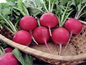 Найраніші овочі: особливості вирощування редиски і салату фото, ілюстрація