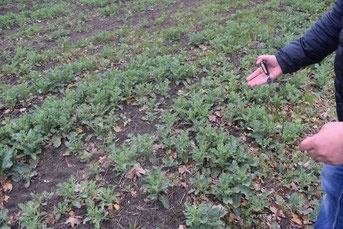 «Ликбез» от природы и дефекты почвенных гербицидов  фото, иллюстрация