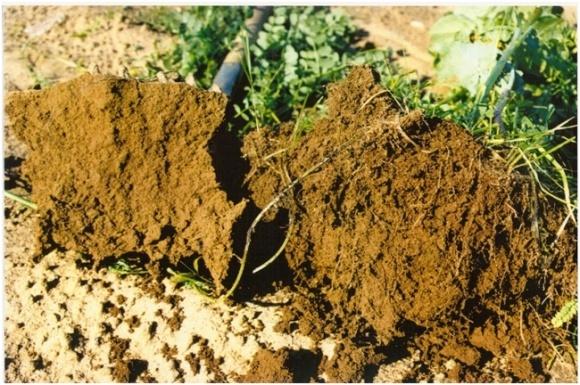 Чому потрібен постійний моніторинг ґрунтів та їх родючості? фото, ілюстрація