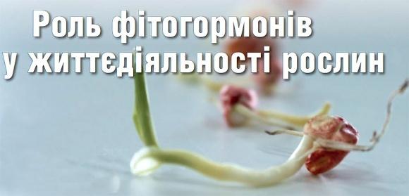Влияние фитогормонов на стимуляцию роста растений фото, иллюстрация