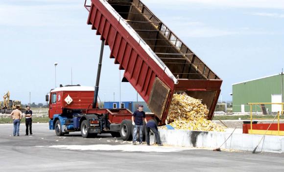 Ринок зерна врожаю 2016 року фото, ілюстрація