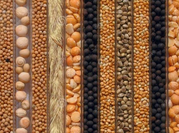 Картинки по запросу насіння