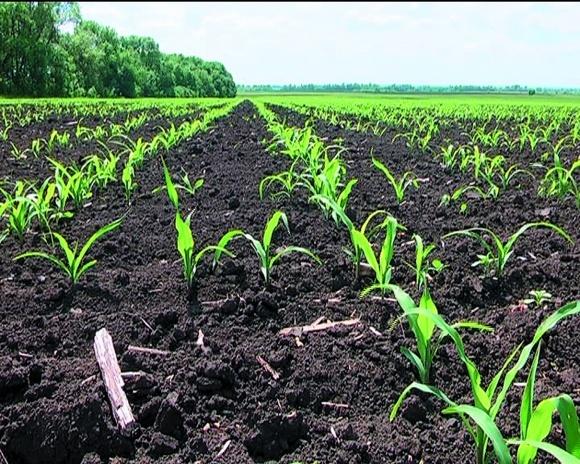 ТОВ «Оріль-Еко»: як сорго може допомогти у вирощуванні органічних ягід фото, ілюстрація