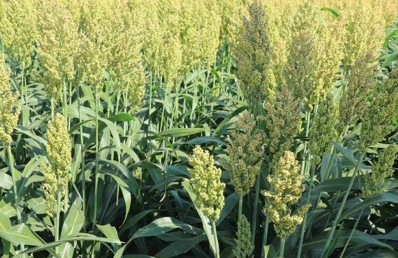 Микоризация — неисчерппаемый ресурс увеличения производительности полевых культур фото, иллюстрация