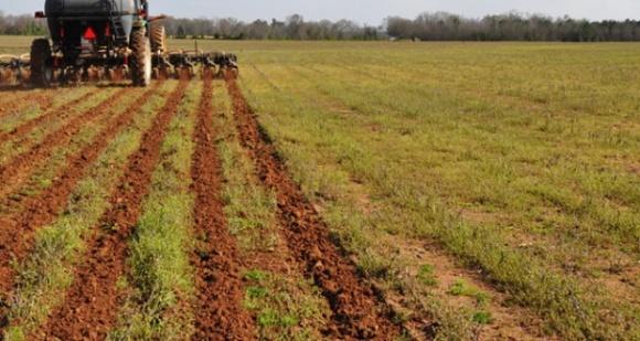 Американский фермер уже 20 лет работает по технологии стрип-тилл фото, иллюстрация