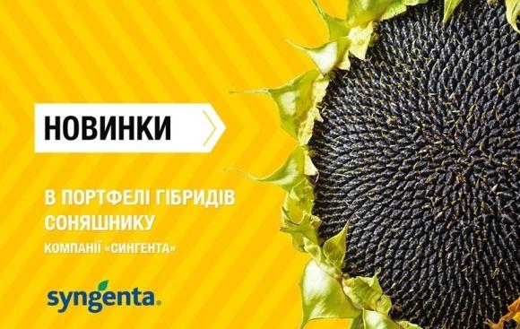 Новинки в портфелі гібридів соняшнику компанії «Сингента» фото, ілюстрація