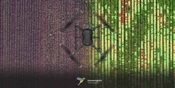 Технології дистанційного визначення бур'янів фото, ілюстрація