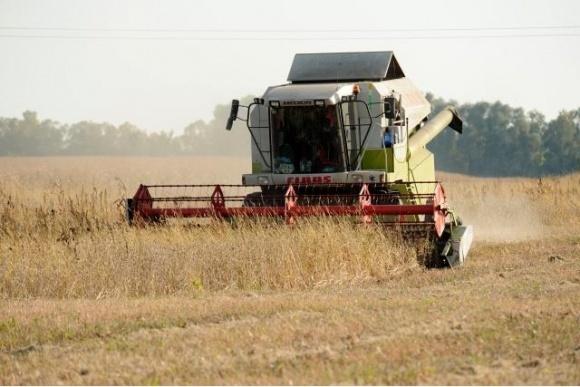 Особливості збирання  та обробки зернових колосових фото, ілюстрація
