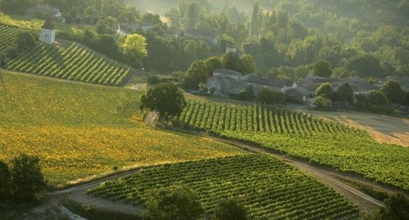Захист виноградників від шкідників і хвороб у літній період фото, ілюстрація