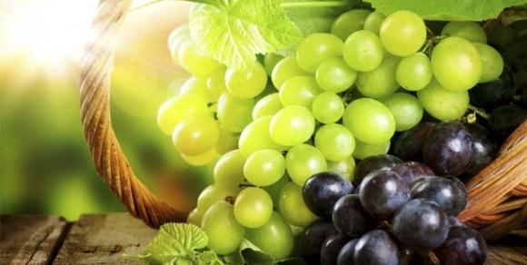 Фітосанітарний прогноз для виноградарів на сезон-2017 фото, ілюстрація
