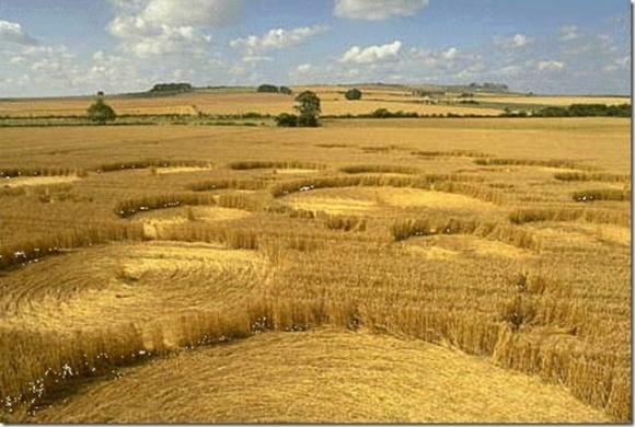 Застосування ретардантів на озимих зернових фото, ілюстрація