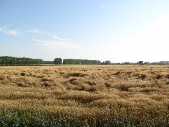 Зернові культури та регулятори росту фото, ілюстрація