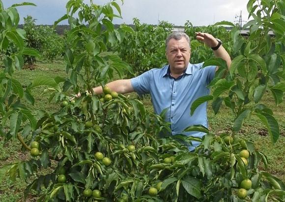 Бизнес на выращивании грецкого ореза в Украине. Реалии и перспективы фото, иллюстрация