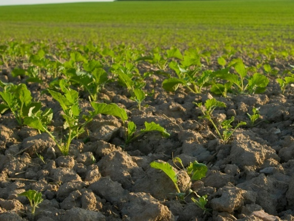 Подбаємо про майбутній урожай з осені фото, ілюстрація