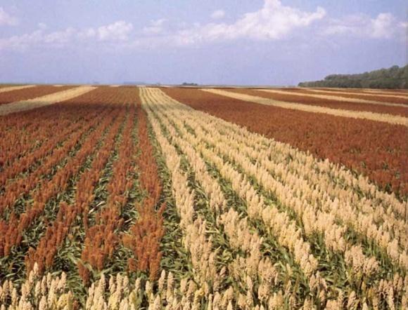 Перспективные культуры для выращивания на территории Украине в 2020 году фото, иллюстрация
