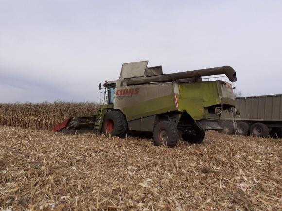 Cтроки збирання кукурудзи фото, ілюстрація