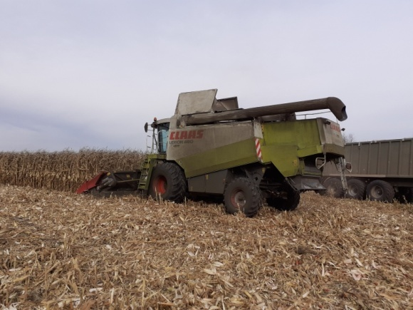 Кукуруза — убираем, дорабатываем, храним фото, иллюстрация