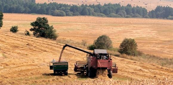 Зерно: в нынешнем сезоне урожайность вырастет на 5%, а к 2022 году валовый сбор составит 100 млн т фото, иллюстрация