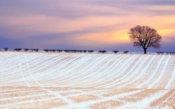 Погляд з Заходу: «Заборона України на продаж сільськогосподарських земель душить її економіку» фото, ілюстрація