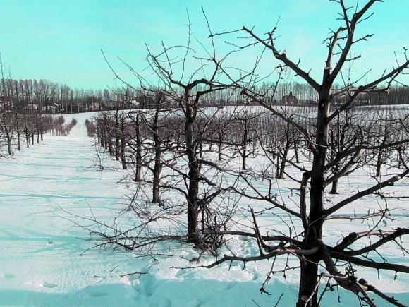 Підготовка саду до зими фото, ілюстрація