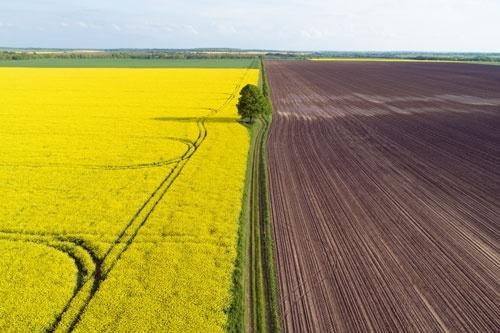 60% глав ОТГ и сельских советов поддерживают введение оборота земель, - Министерство экономики фото, иллюстрация