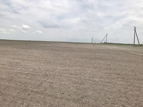 Негода продовжує шкодити посівам цукрових буряків фото, ілюстрація