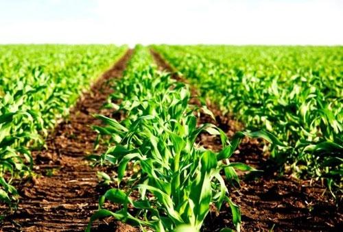 Прогнозувати вплив посухи на врожай озимих — передчасно фото, ілюстрація