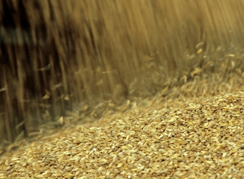 Експорт Українського зерна в 2019/19 МР перевищив 47 млн тон, - Мінагрополітики фото, ілюстрація