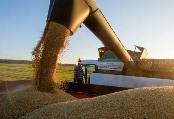 Несмотря на засуху, Минагрополитики заявляет, что предпосылок для дефицита пшеницы нет фото, иллюстрация