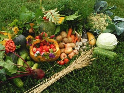 «УкрАгроКонсалт» дав прогноз врожайності на нинішній рік фото, ілюстрація