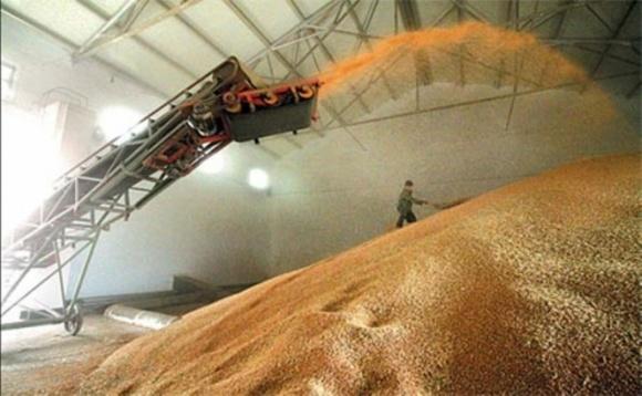 Першими імпортерами нашого зерна стали Ємен, Туніс та Ізраїль фото, ілюстрація