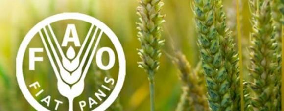 Украинское сельское хозяйство должно стать климатически адаптированным, - Ковалева фото, иллюстрация