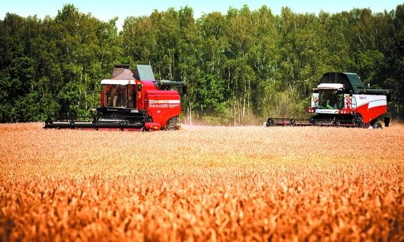 Производство зерновых в ЕС возрастет фото, иллюстрация