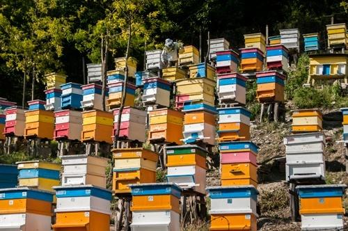 Пасічники обговорили спільні дії в питаннях врегулювання актуальних проблем галузі бджільництва, - Держпродспоживслужба фото, ілюстрація