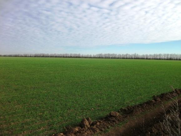 Аномально теплые зимы могут увеличить валовой сбор озимой пшеницы фото, иллюстрация