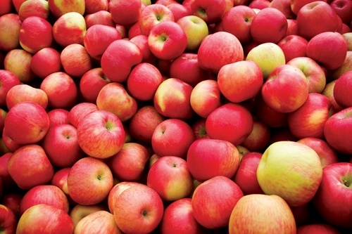 Запасы яблок в ЕС являются рекордными минимум за 12 последних лет фото, иллюстрация