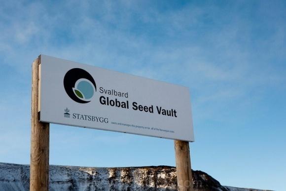 Всемирный банк семян оказался под угрозой фото, иллюстрация