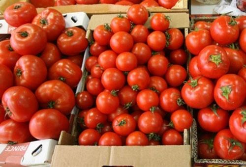 В Украину зашли первые партии тепличных томатов из Турции фото, иллюстрация