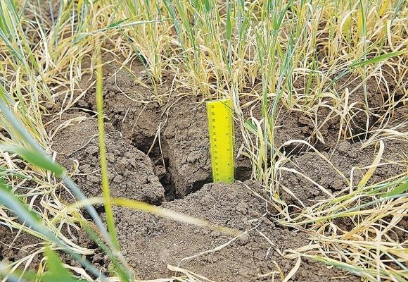 В ряде районов Польши засухой повреждено 90% посевов зерновых культур фото, иллюстрация