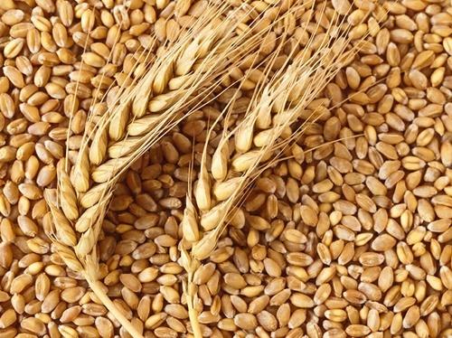 Експорт зернових с початку сезону становить 28.6 млн тон фото, ілюстрація